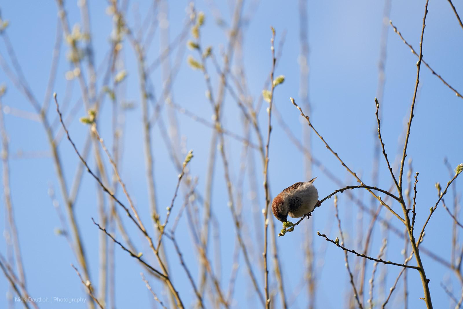 Bird breakfasting