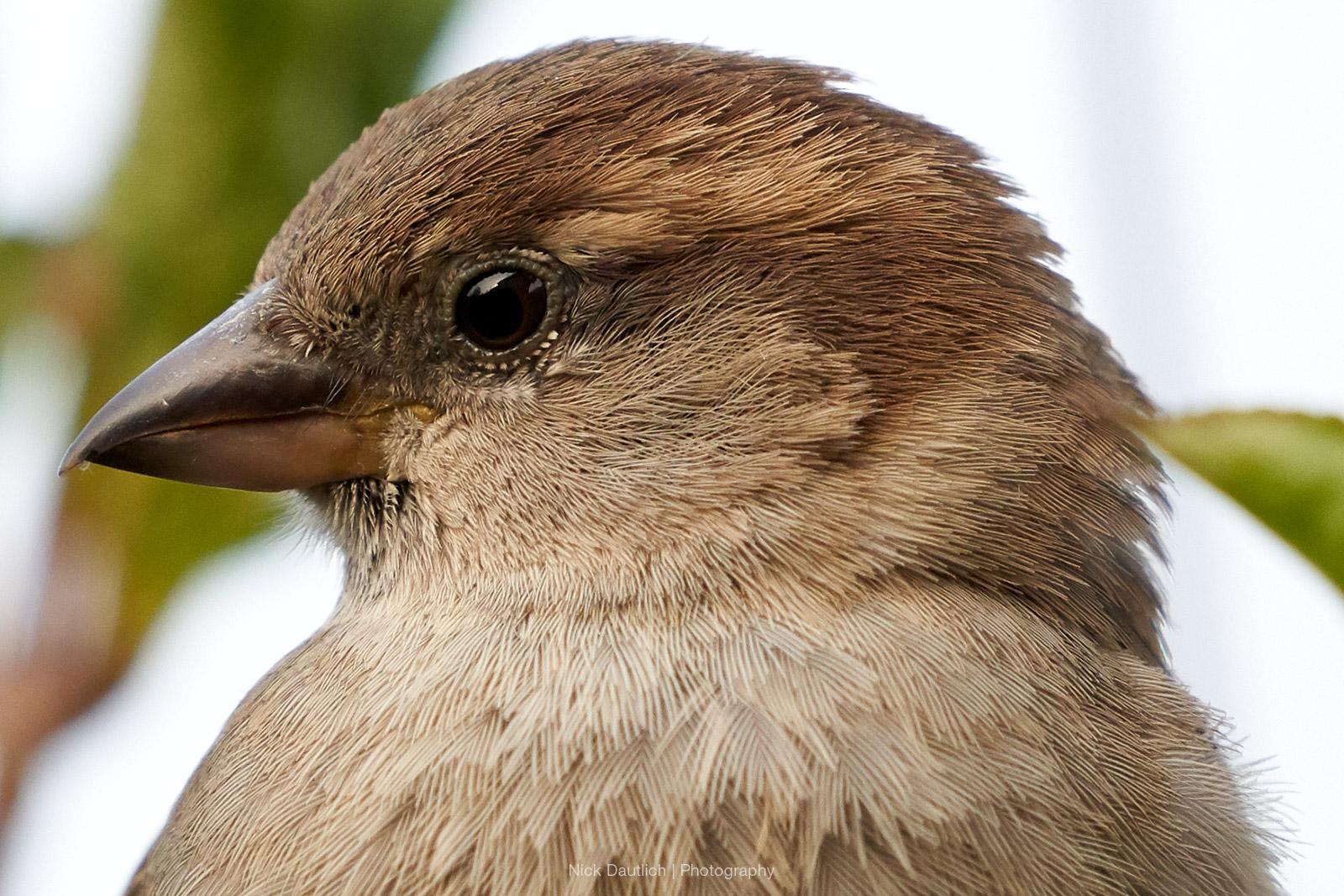 Close-up of bird details