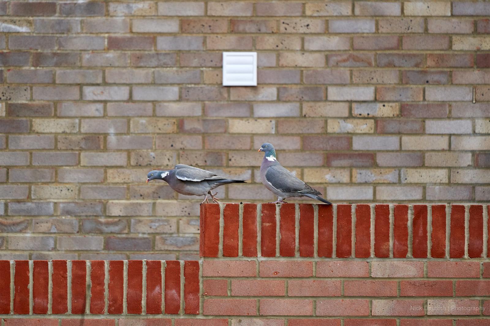 Garden bird photography tips at home