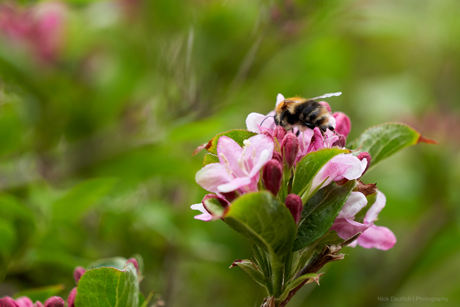 More bee macro image