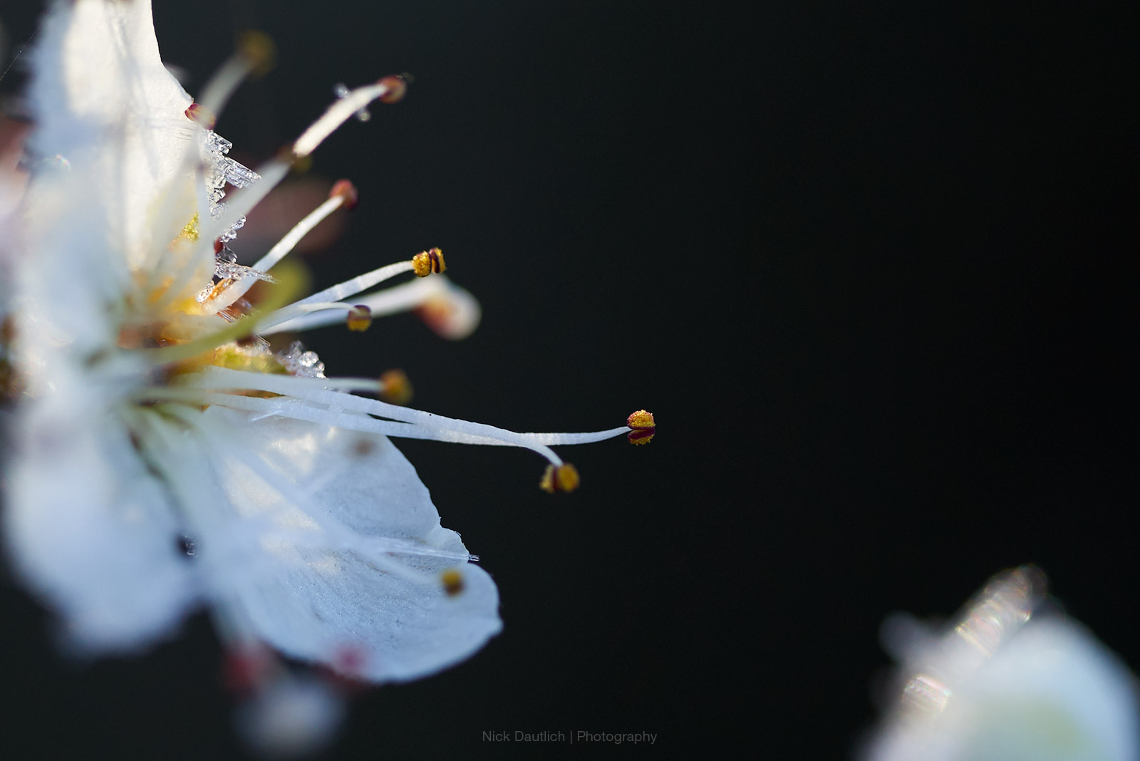 Extreme close-up macro of blossom