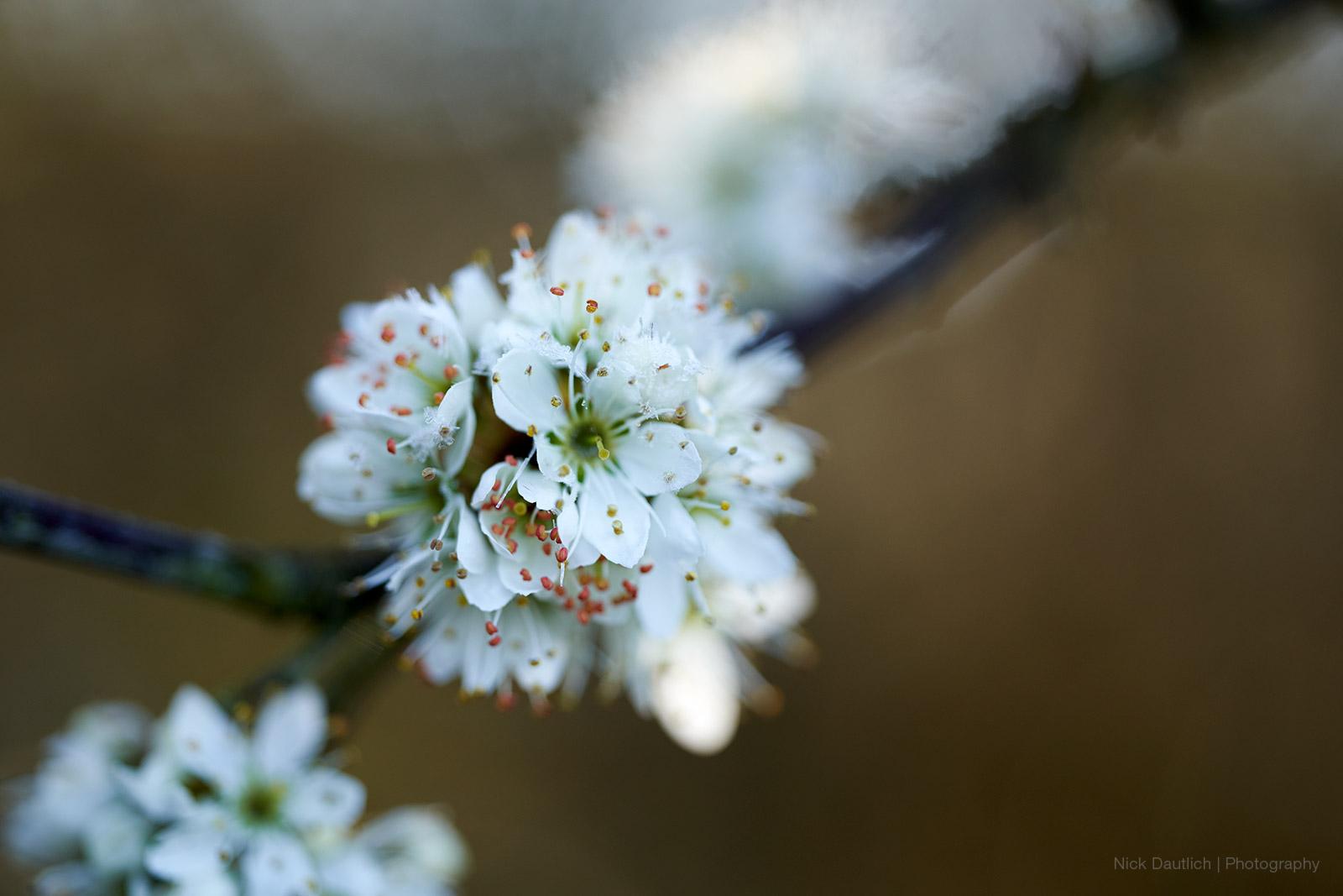 Spring blossoms macro image
