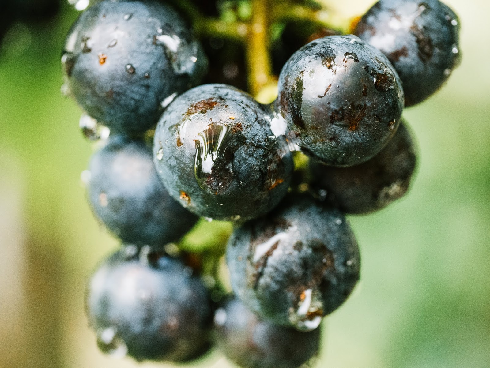 Macro Grapes