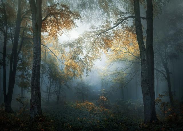 'Early Autumn' by Veselin Atanasov