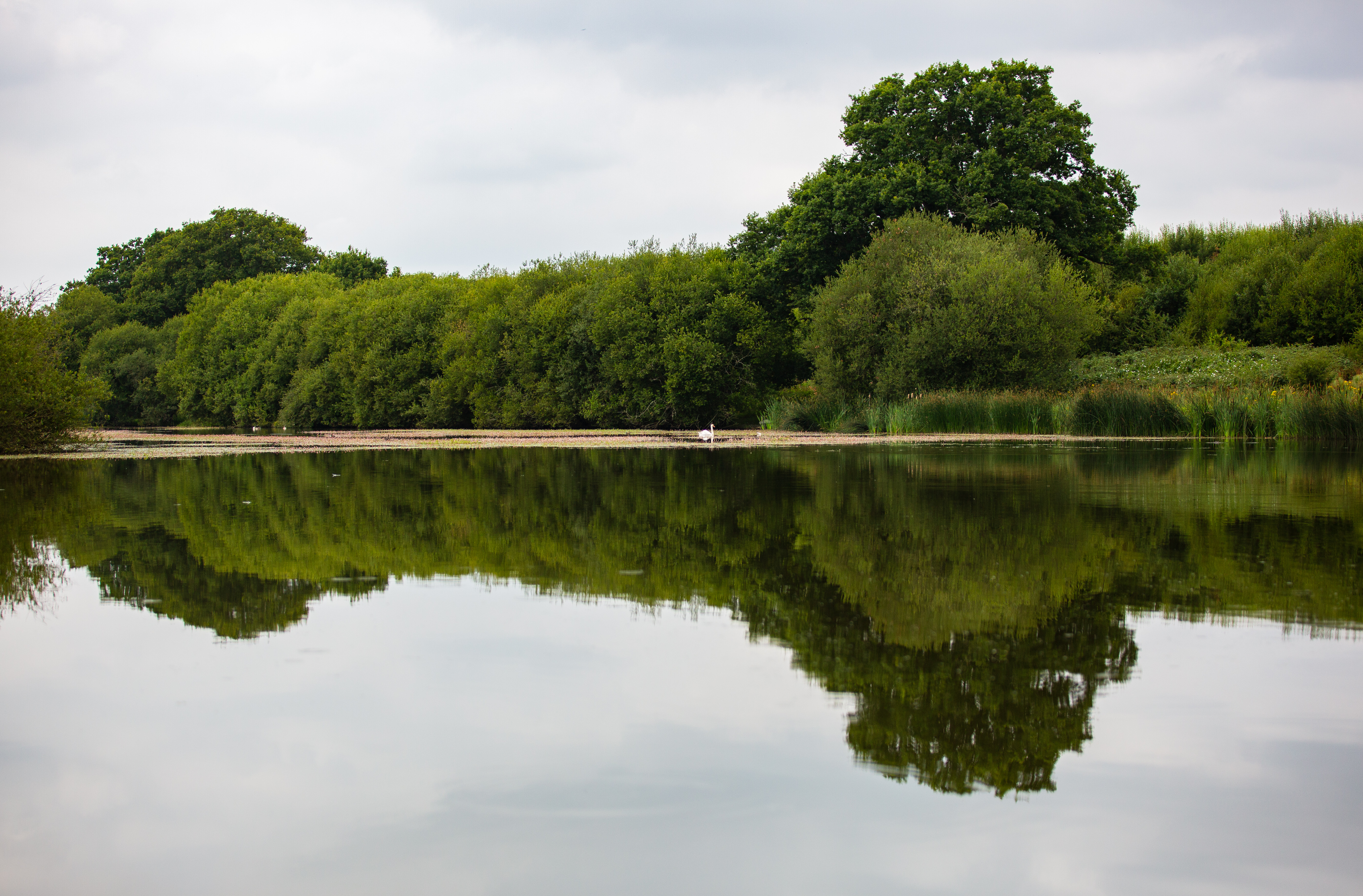 View of the hammer pond at knopp estate - zeiss nature walk - park cameras - ashley laurence