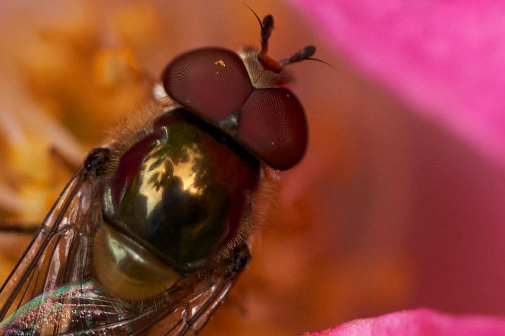 Insect macro shot 100 percent crop