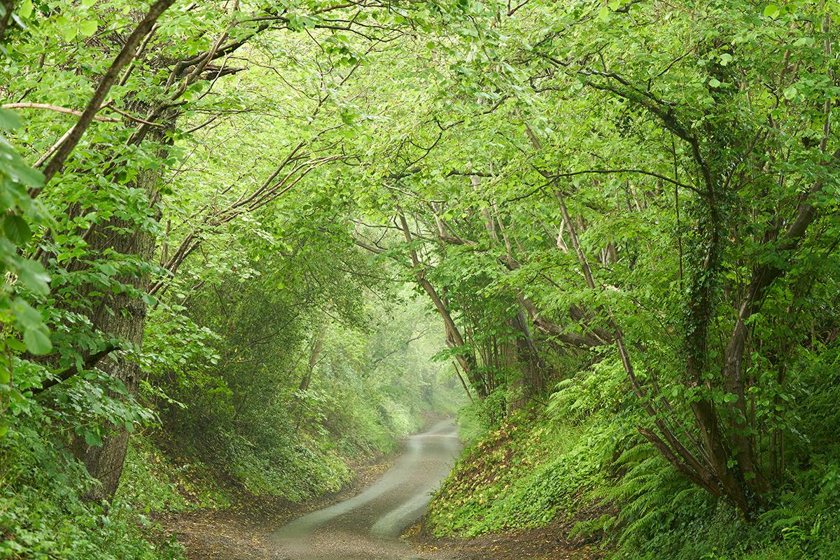 4 second exposure of tree tunnel