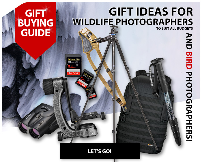 Best gifts for wildlife and bird photographers