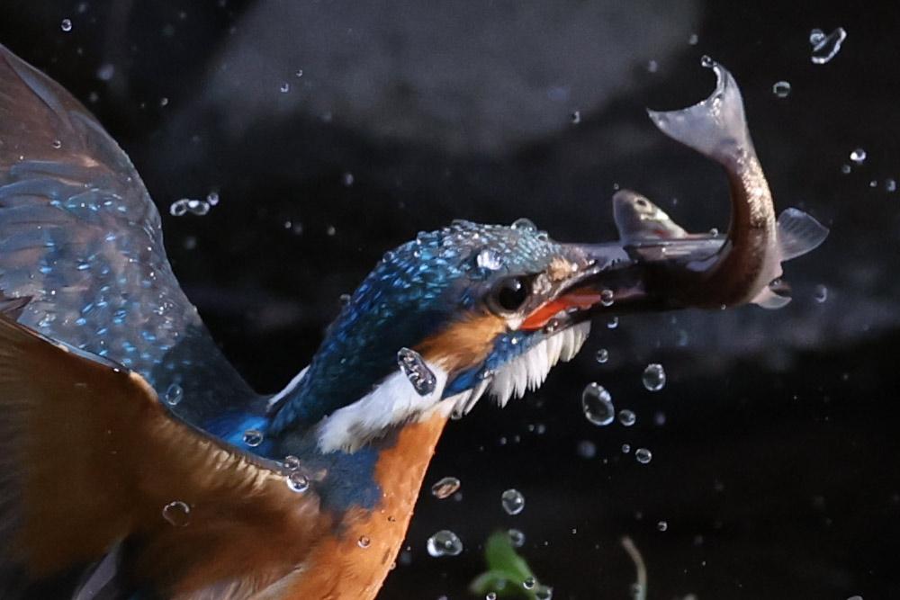100 percent crop of bird photo