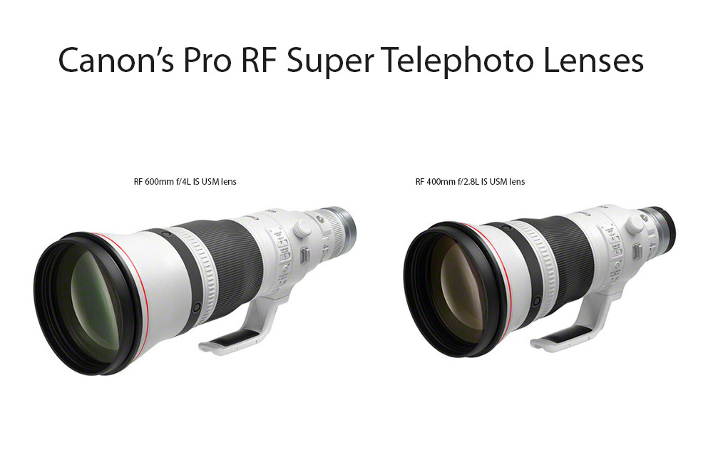 the two new Canon Pro RF 400mm F2.8 And RF 600mm F4 Super Telephoto Prime Lenses