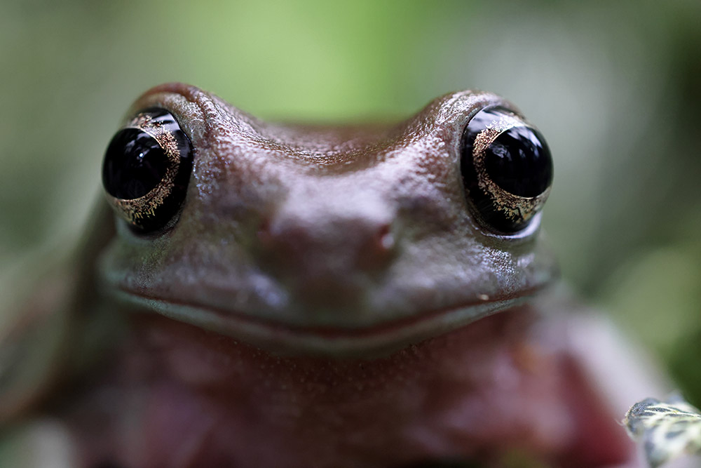 Extreme close-up with frogs eyes
