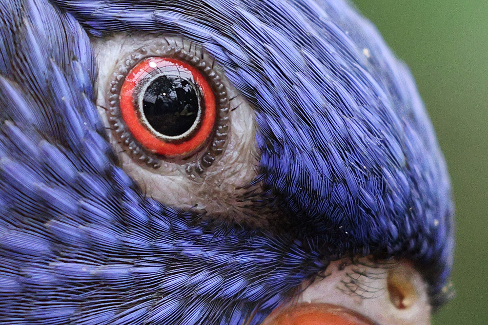 100 percent close-up with eyeball from bird sample