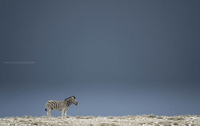 Zebra by Chris Schmid