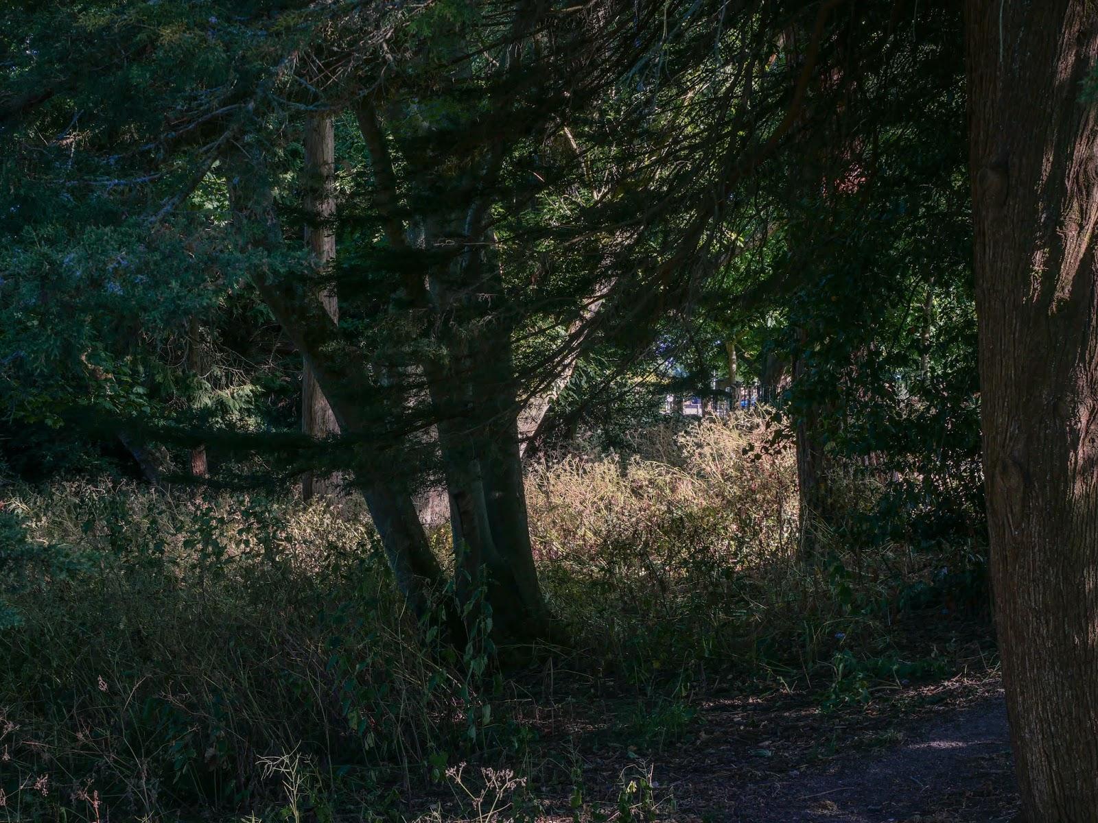 Sample photo