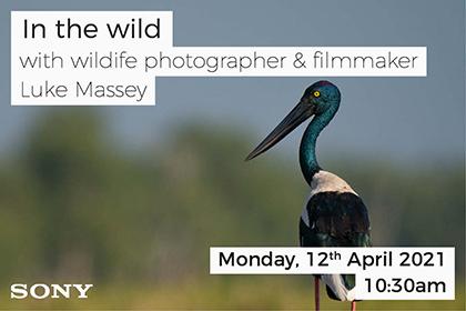 In the Wild; with photographer Luke Massey