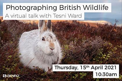 Photographing British Wildlife; a virtual talk with Tesni Ward