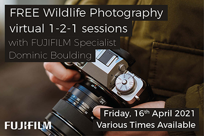 Wildlife photography virtual 1-2-1 sessions with Fujifilm