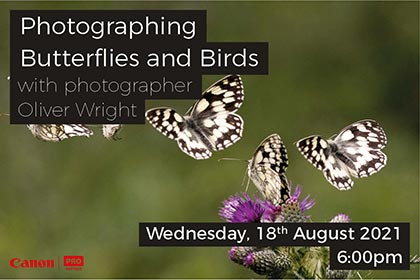 Photographing Butterflies and Birds with Oliver Wright