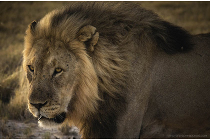Photographing African Wildlife with Sony RX10 III