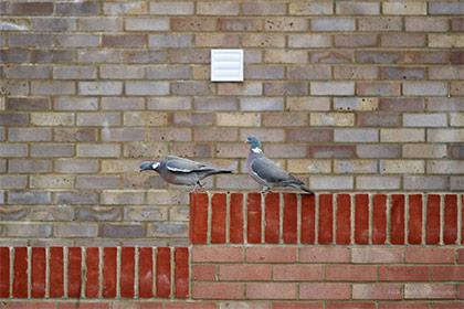 10 Garden bird photography tips