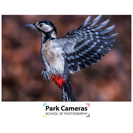 School of Photography Introduction to Bird Photography